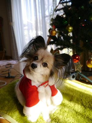 2012クリスマス2.JPG