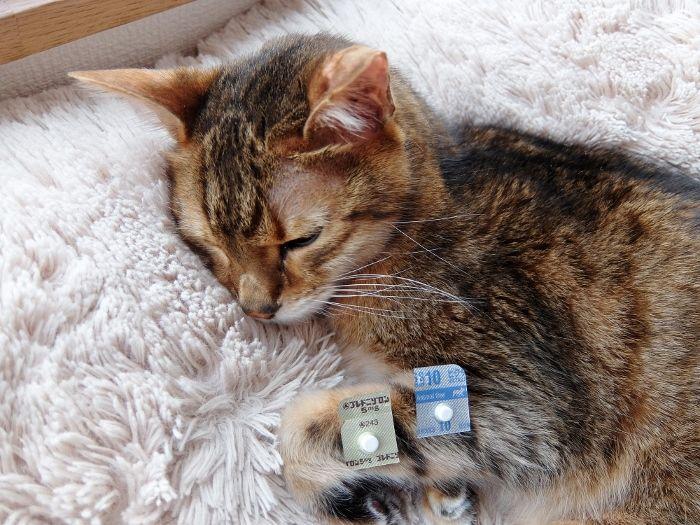 猫 ねこ ビクタスSS 抗生剤 ブレドニゾロン 炎症 ステロイドホルモン