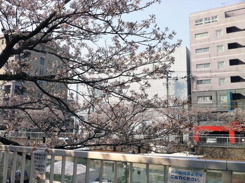 堀川さくら.jpg