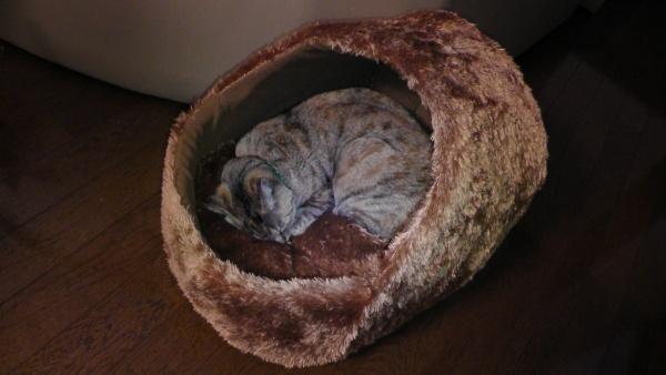 通常使用時の猫ベッド