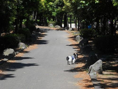 20130503 海の公園 ジョギングコース