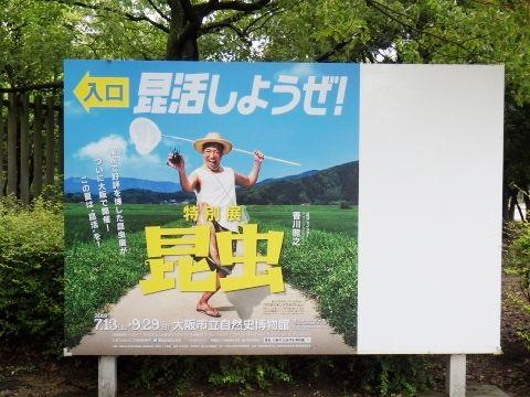 大阪市立自然史博物館2019年7月下旬1 特別展昆虫