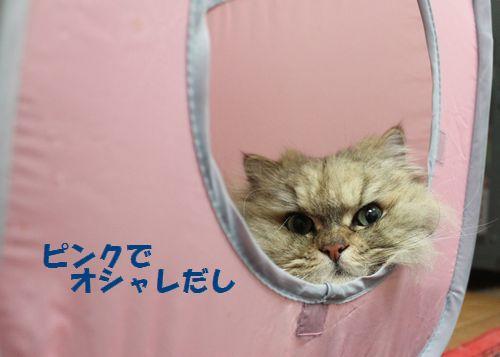 段ボール猫5.jpg