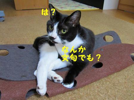 IMG_9653.jpg