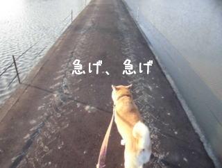 0608夕田んぼ3.jpg