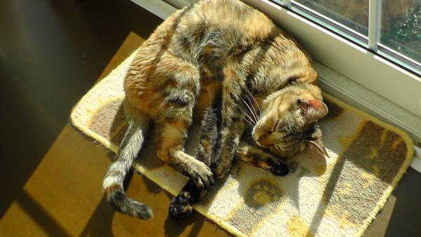 ぬくぬくと日向ぼっこしている猫