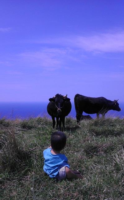 牛と対峙.jpg