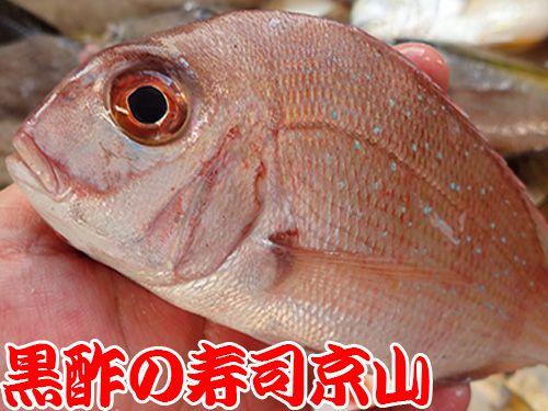 真鯛 寿司 出前 未利用魚