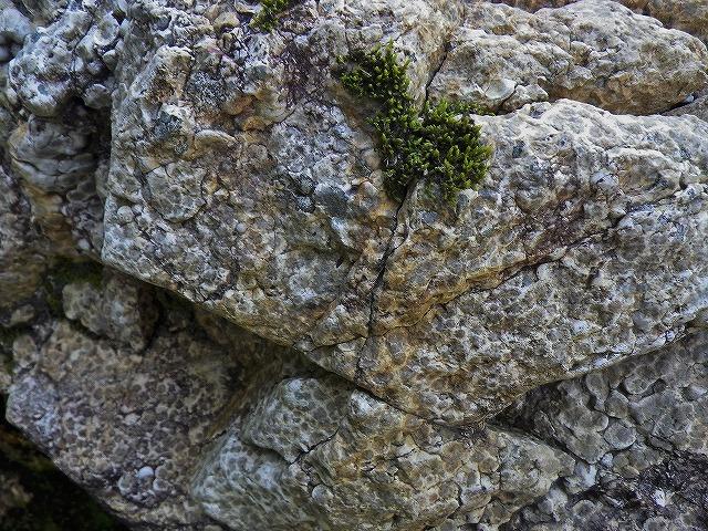 紋石の巨石