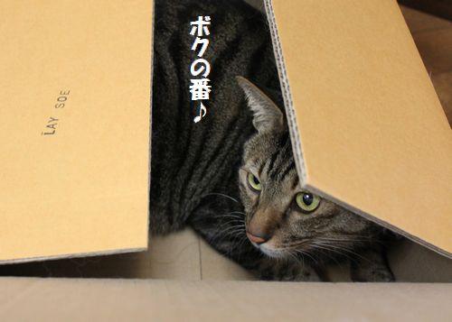 段ボール猫2.jpg