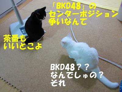 BKD48?.jpg