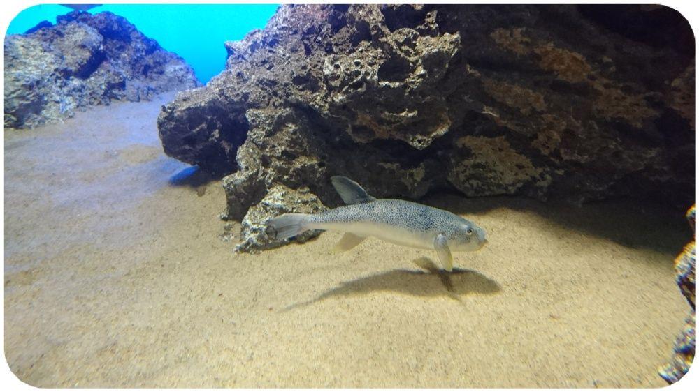 暑さは厳しいけれど、秋風が立ち始める頃 水族館 その6