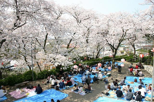 ウエノ公園桜.jpg