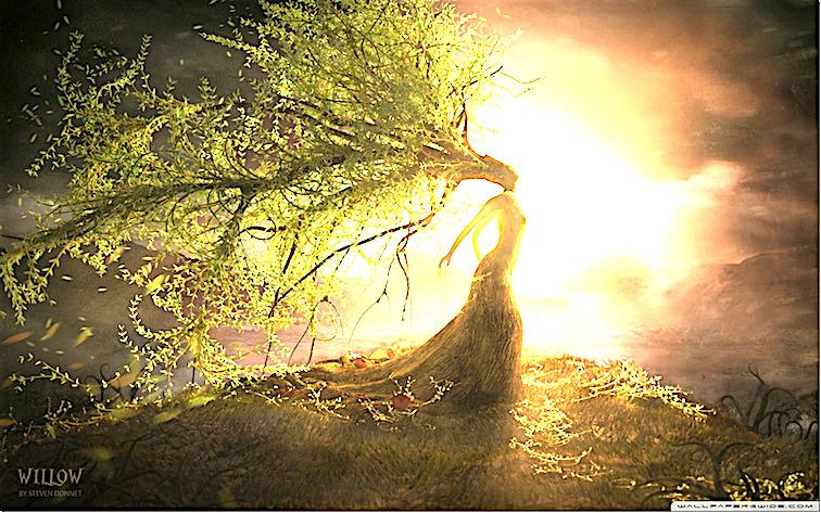 fantasy_willow-wallpaper-1680x1050_thumb.jpg