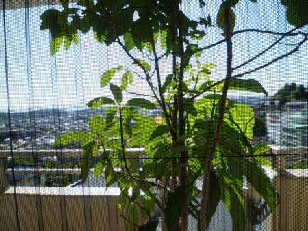 5カーテン洗い 出窓2450.jpg