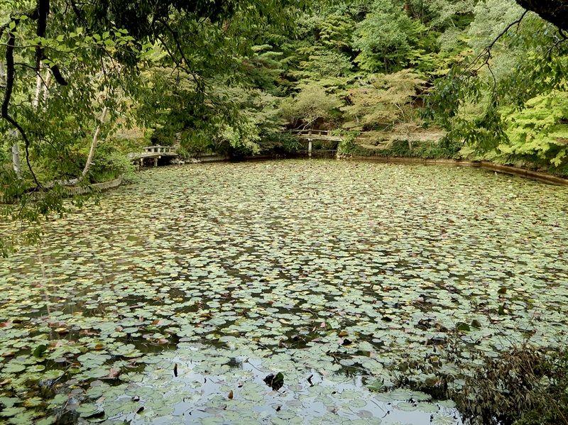 長谷池10
