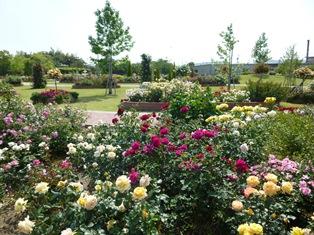 11_バラ公園.JPG