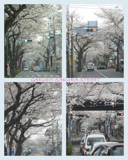 お花見20137.jpg