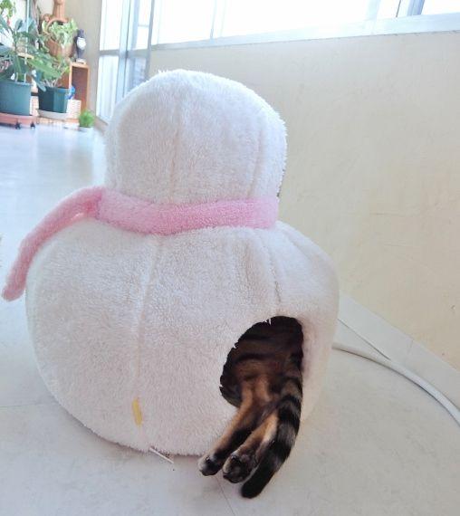 cat reborn 英語 英会話 inquire 出産