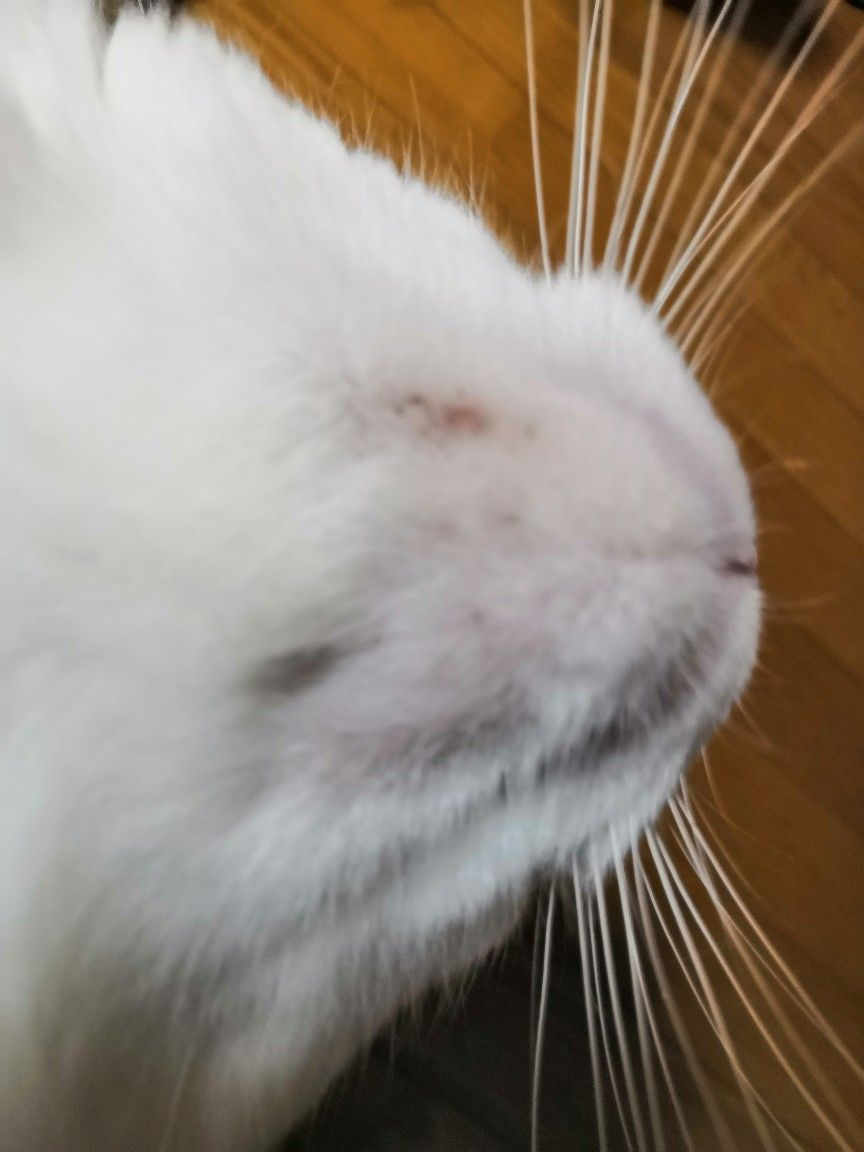 あご にきび 猫