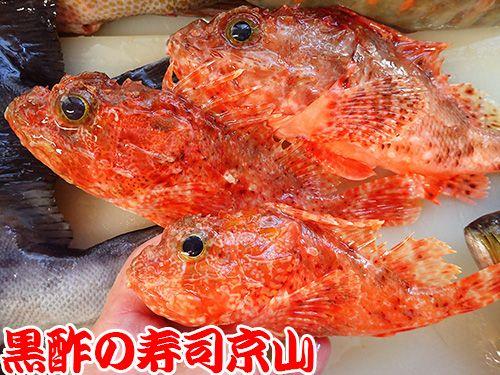 寿司 出前 江戸川区 西篠崎