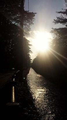 17-01-03 公園散歩1