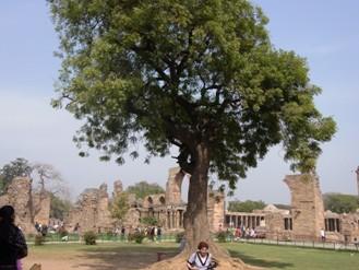 広い遺跡で木も多い