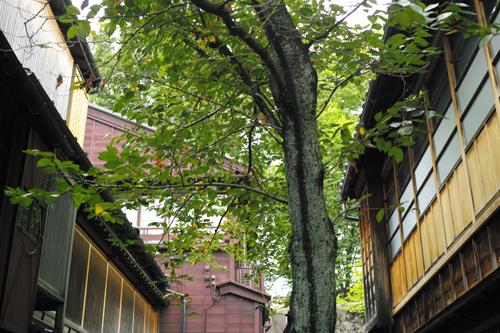 木建物.jpg