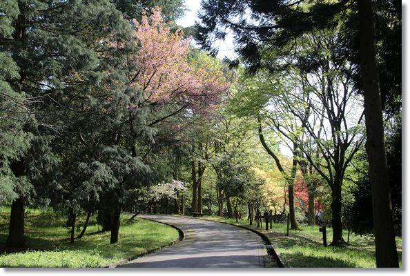 樹木公園-26 16.4.20