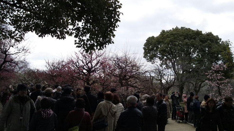 0303 大阪城公園梅林1