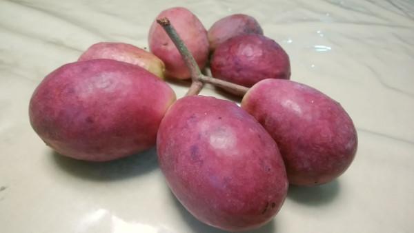 収穫したムベの実
