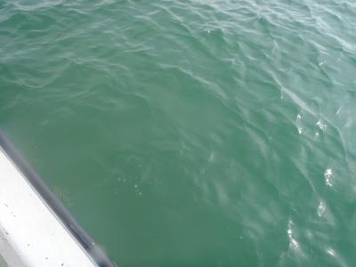 沖縄磯採集2013年7月下旬26 海