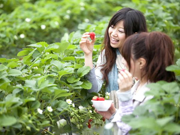 甘~いイチゴの季節到~来♪♪