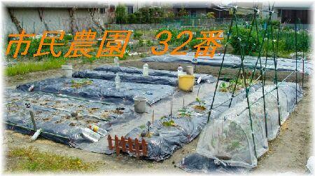 市民農園 32番