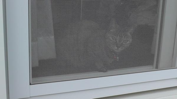 網戸 猫 掃き出し窓