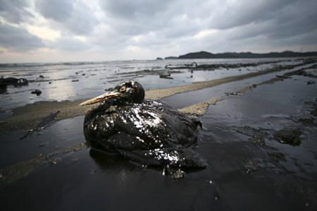 石油流出事故