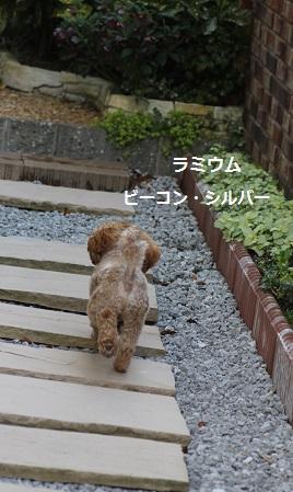 2014_0404_150417-IMG_3775.JPG