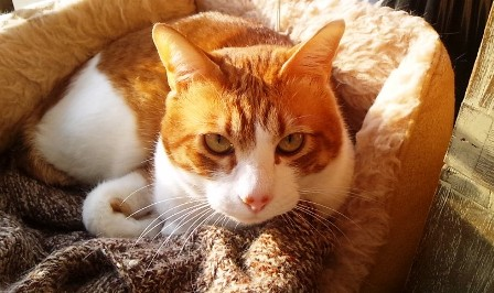 牛鼻CAT