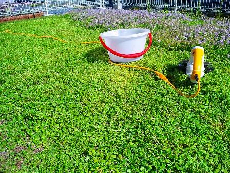 ロンギカウリスの花を刈り込みました5