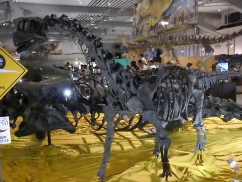 恐竜展2017巨大化の謎にせまる18 カマラサウルス亜成体の全身骨格