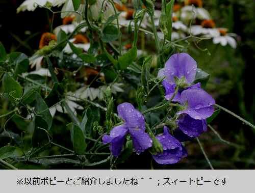 2014_0707_115840-IMG_2329.JPG