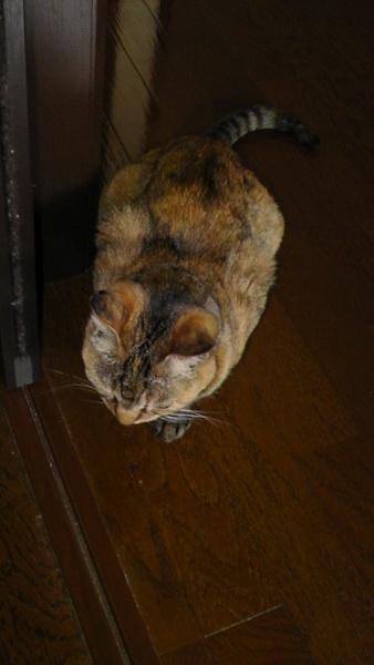 ネコ ねこ 猫 廊下