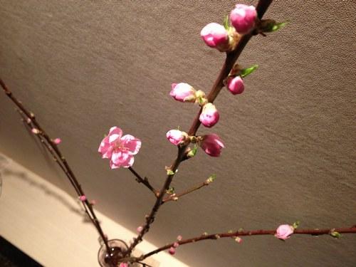 2桃の花 5002.jpg