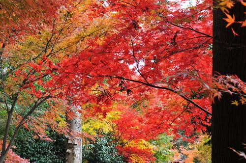 heirin_ji2012g.jpg