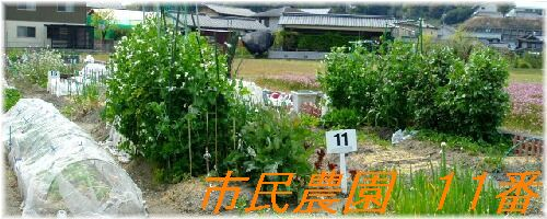 市民農園 11番