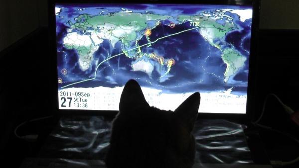 動画をチェック中の猫