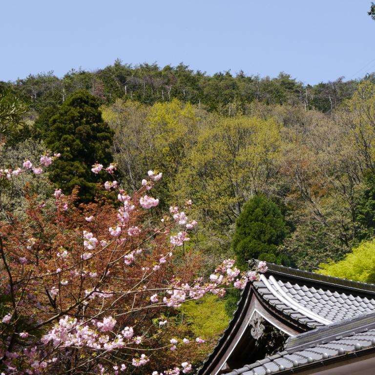 P1060997(桜).jpg