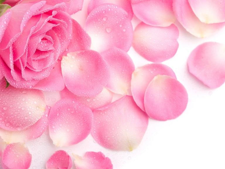 Pink-rose-petals_1920x1440.jpg