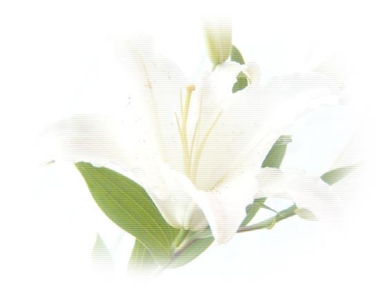 HPブログ用画像 1229.jpg
