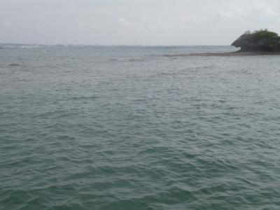 沖縄磯採集2013年7月下旬25 海